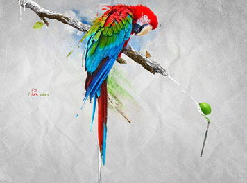 I love colors Wallpaper