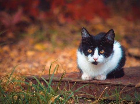 Autumn Kitten by Mish-A-Man